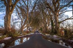 Irlande du Nord/Dark Hedges