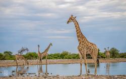 Namibie/Etosha