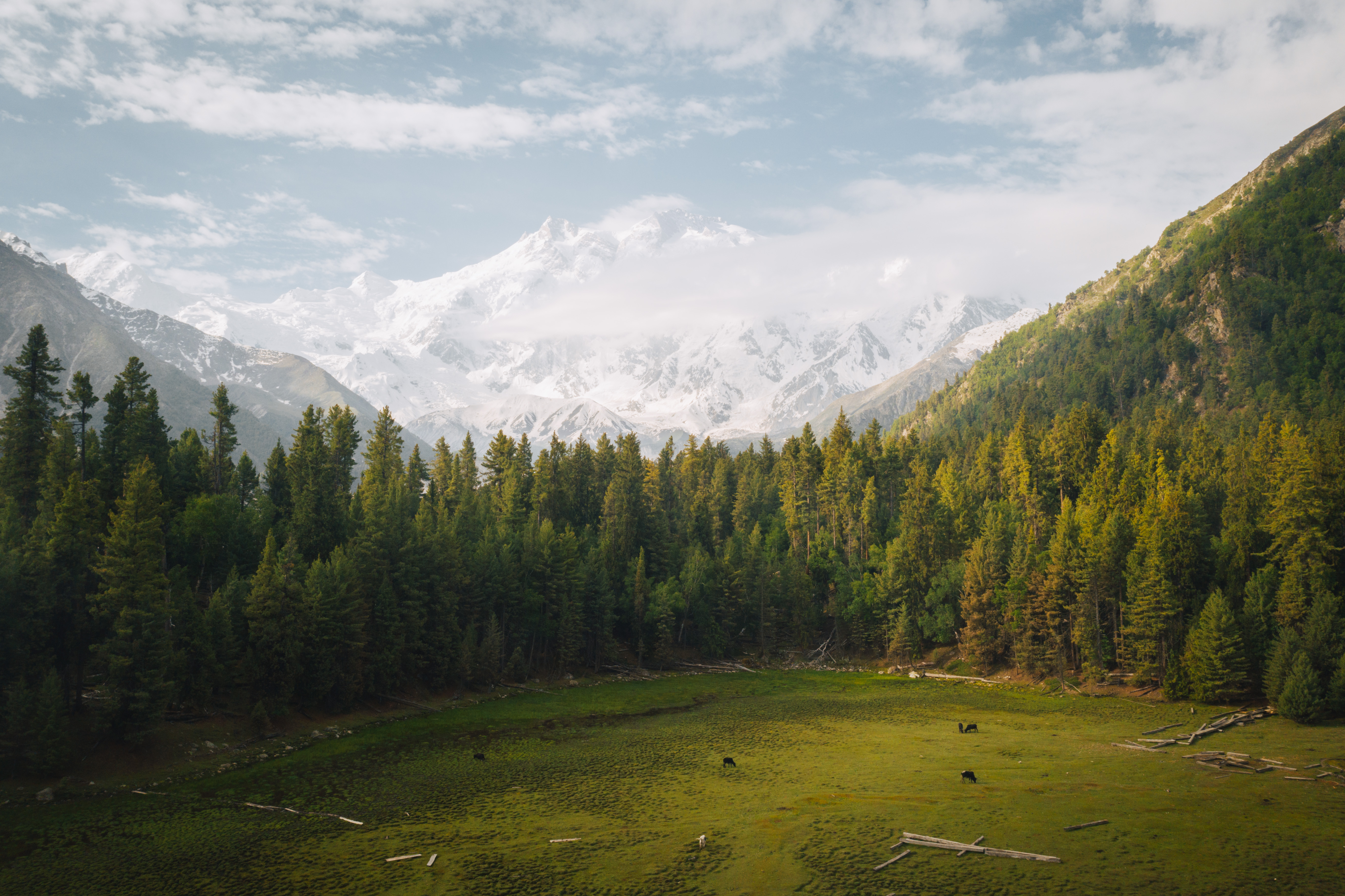 Pakistan/Fairy meadows