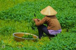 Vietnam/Hué