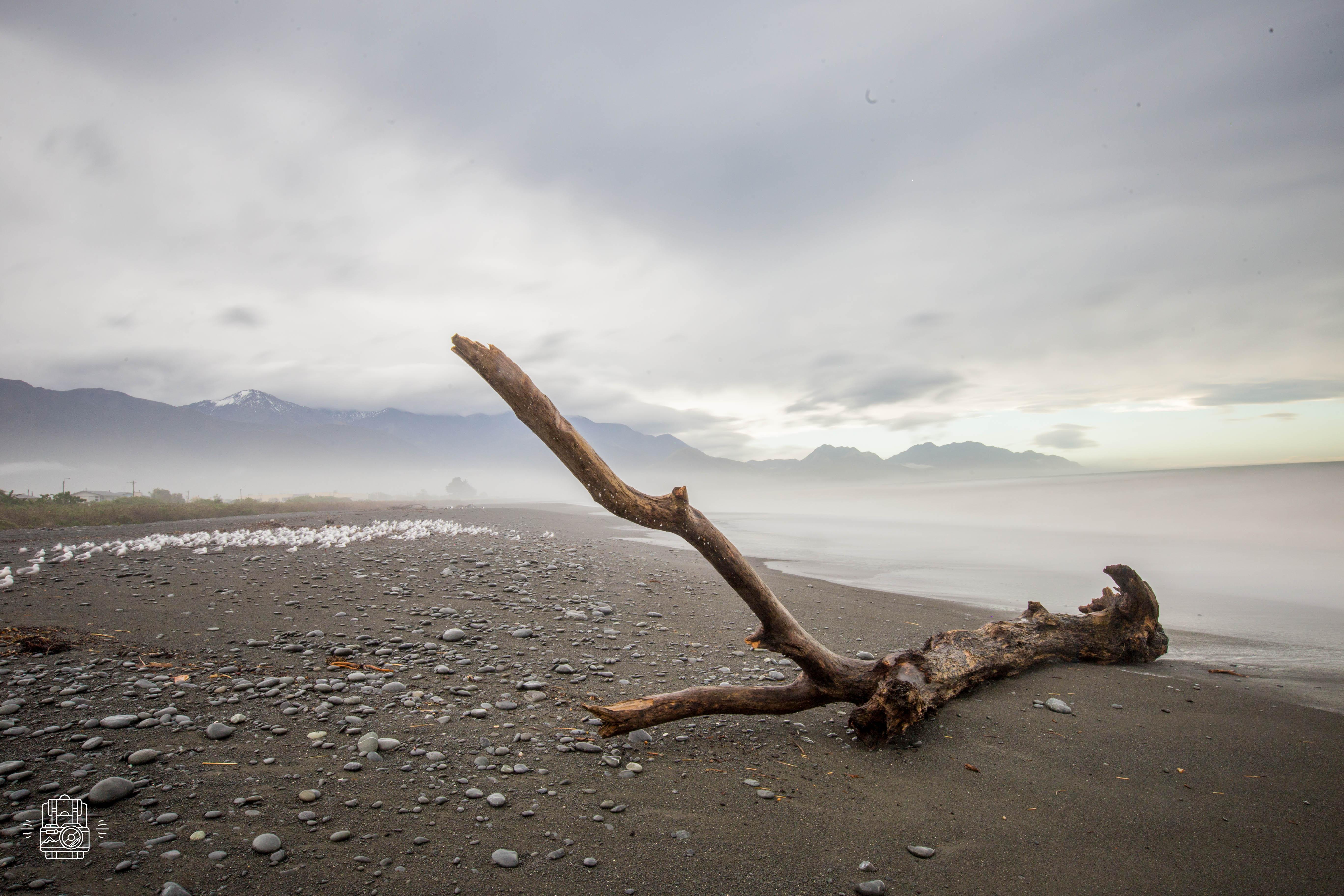 Nouvelle-Zélande/Kalkoura