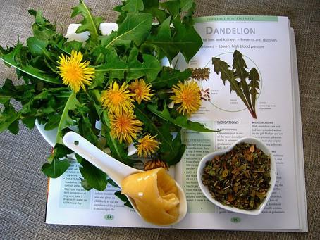 Dandelion Tea, Great for Detox & More
