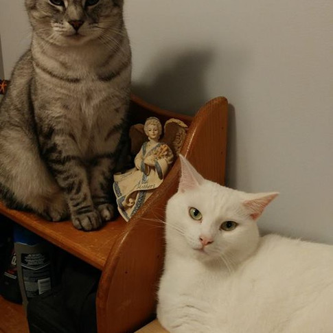 """""""Vanilla"""" & """"Silver"""" adopted by Marilyn"""