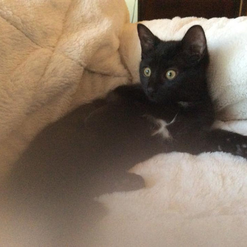 """""""Gabby"""" adopted by Alona"""