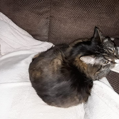 """""""Hailey"""" adopted by Lorna"""
