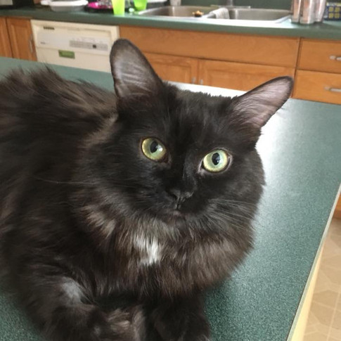 """""""Pickles"""" adopted by Tracey"""