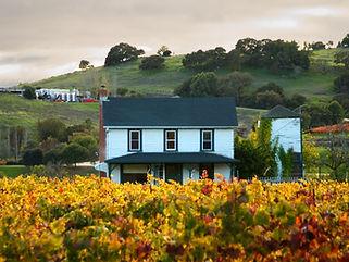 Sonoma Farm House Vineyard