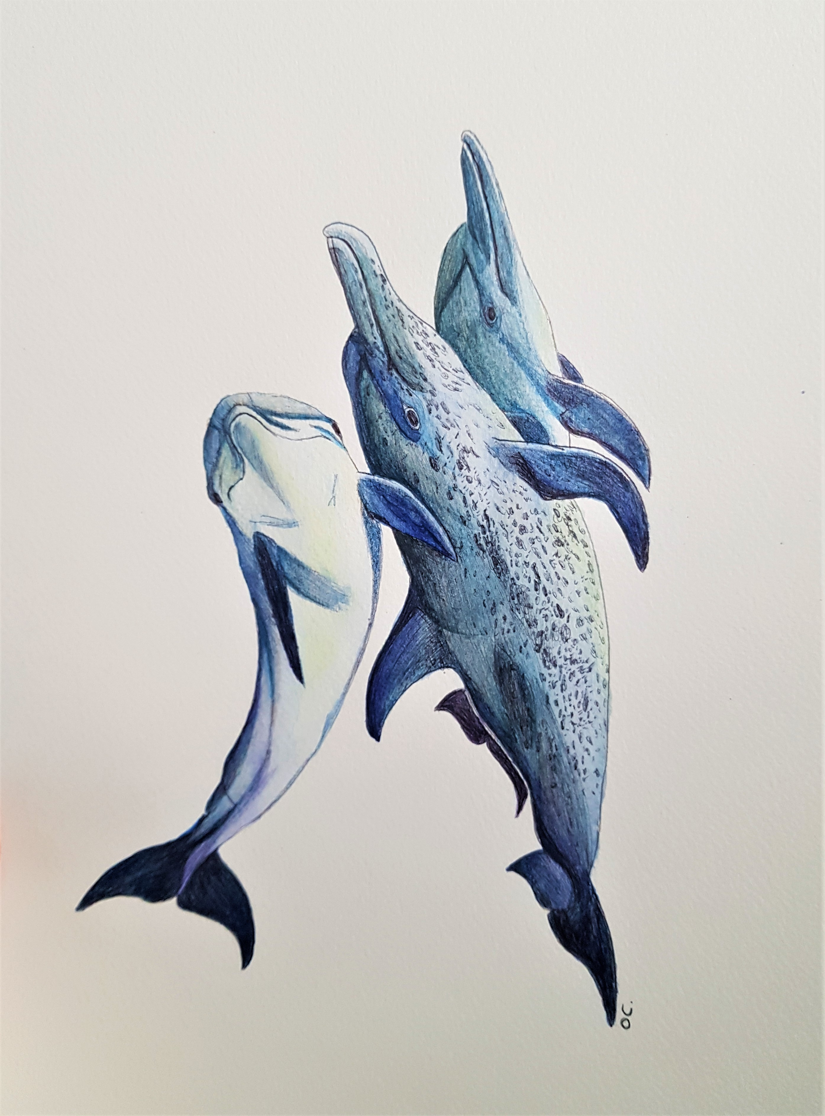 bouquet de dauphins