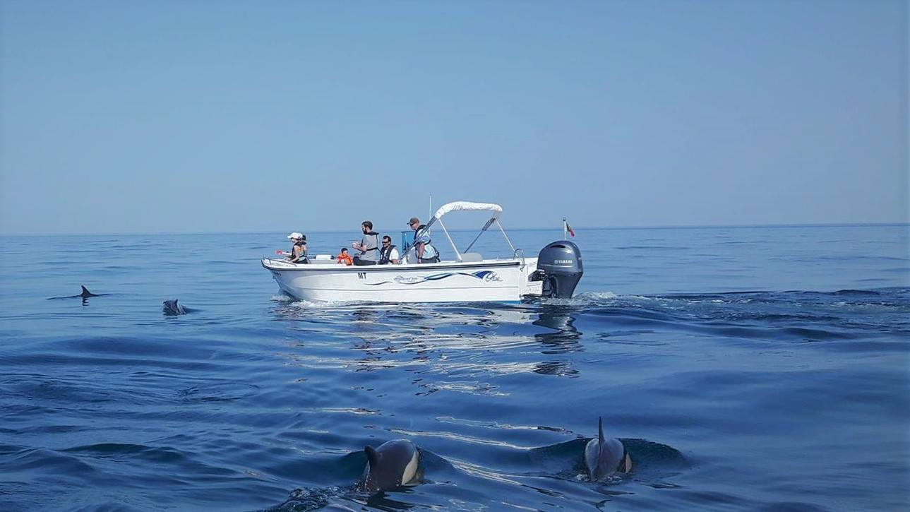 Ecomarine Algarve - Golfinhos