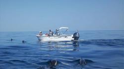 Ecomarine Algarve - Dolphins