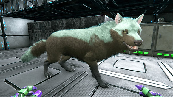 238 Direwolf Female PS4 PVE OFFICIAL DEDICATED SERVER