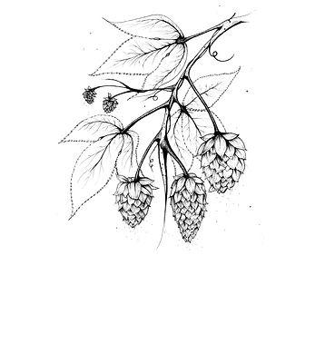 Hops_FDWinterfloodIllustration
