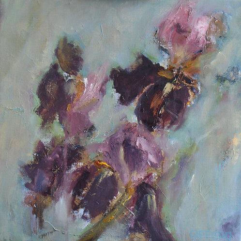 Rosemary Gifford    Bearded Iris