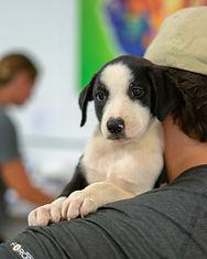 Puppy corner 5.jpg