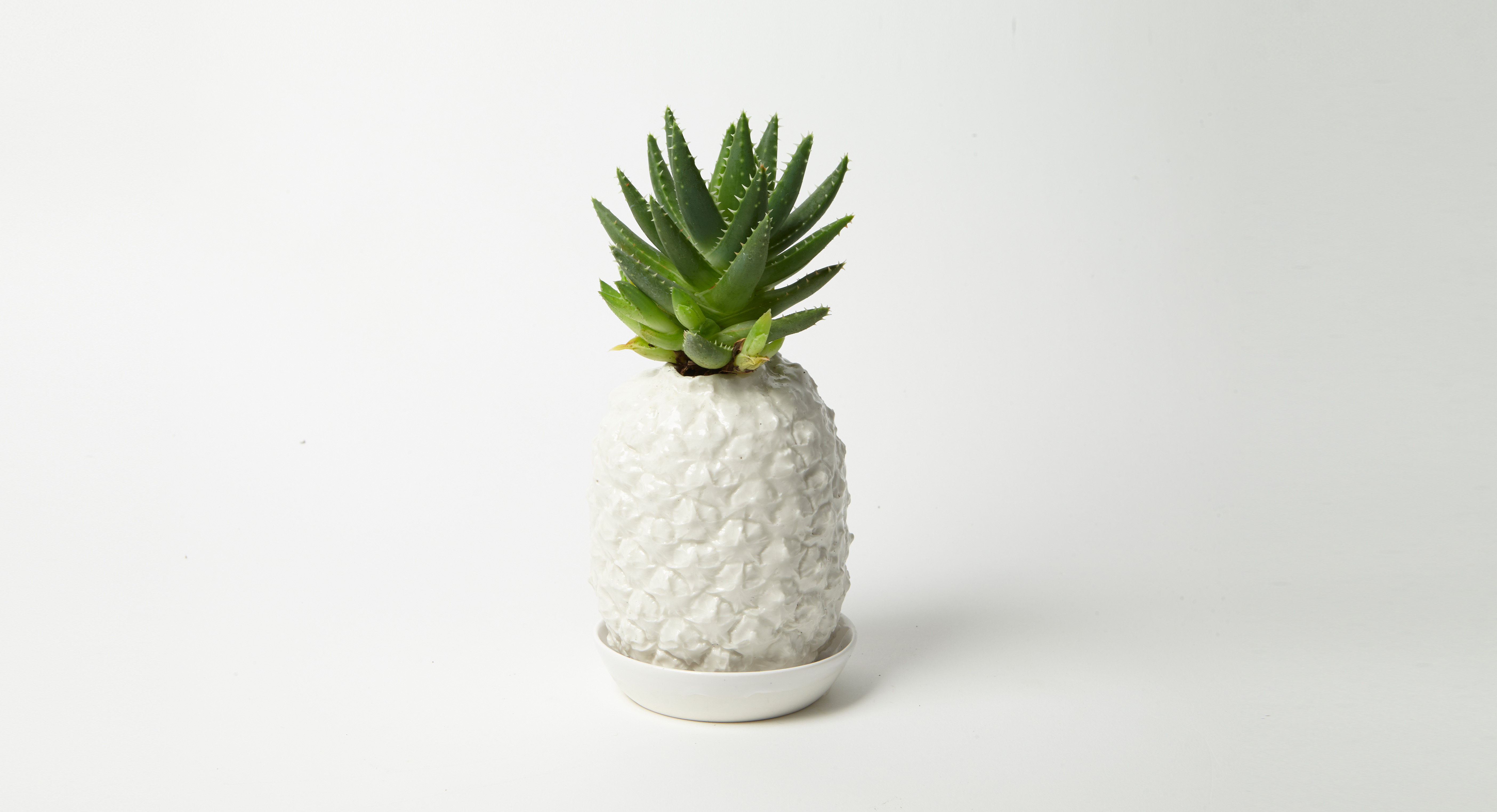 Pot ananas Cayenne lisse