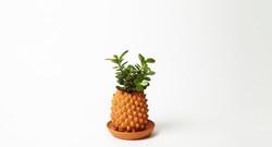 Pot ananas Victoria