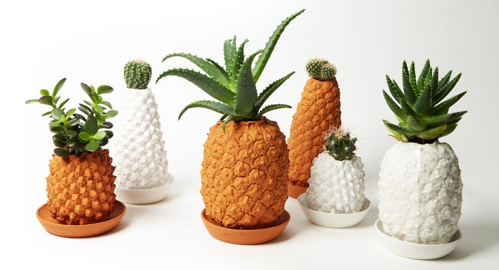 Les pots ananas