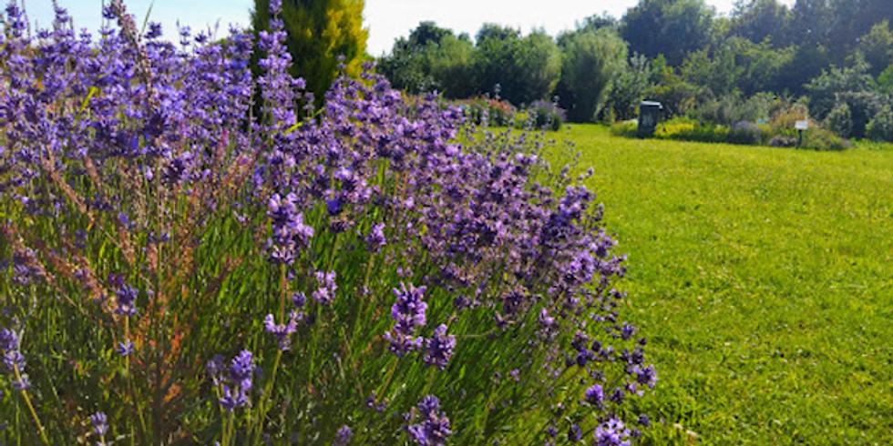 Dunton Gardens Outdoor Yoga