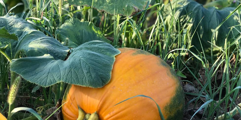 Pumpkin Opening Weekend Craft Fair