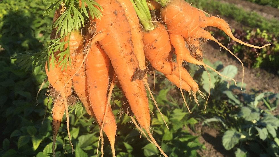Carrots -  bunch