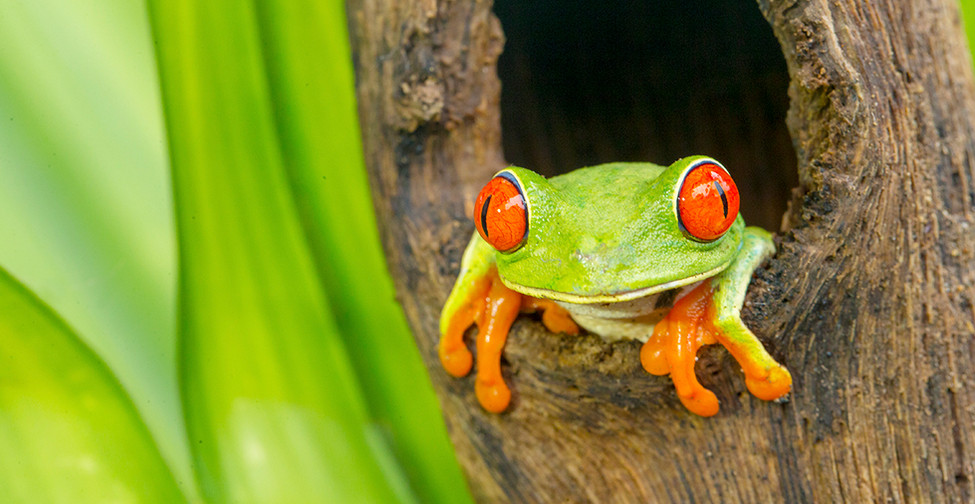 Front Frog.jpg