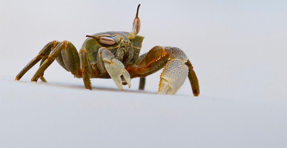 web crab.jpg