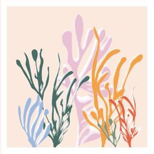 Bouquet d'algues