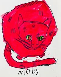 Moby's cat.jpg