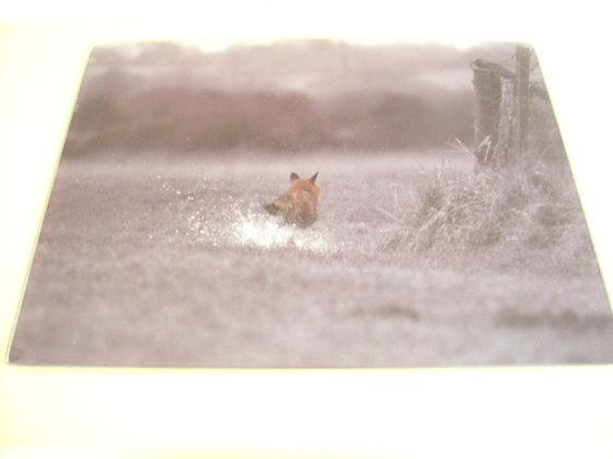 WORKTOP SAVER ( fox on the run )