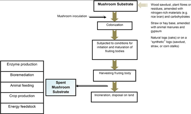 The-mushroom-production-cycle-from-prepa