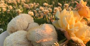 Starring Lion's Mane Mushrooms