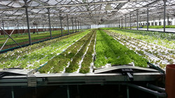 Middle east - Greenhouse Tech