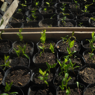 250 AR$ - Plant 10 Native Trees!