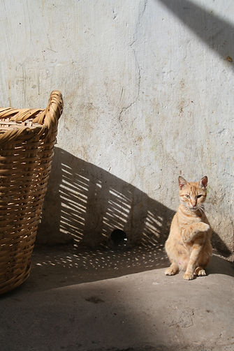 Stray cat in Morocco