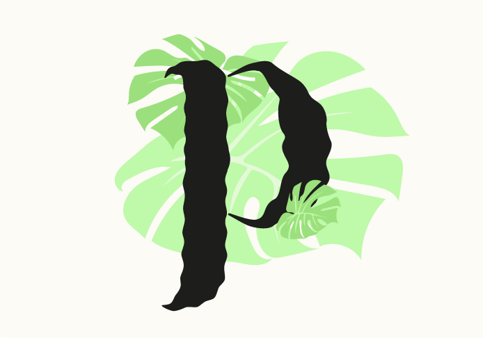 compo_philodendron_monstera.png
