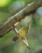 pin-striped-tit-1697878_1280.jpg