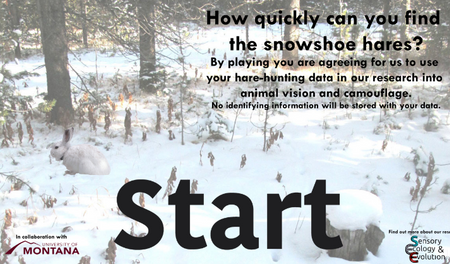 Where is the Hare? Play a game to help our research on camouflage and climate change!!
