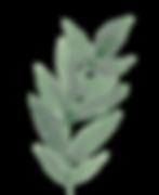 mini-plante-decorative.png