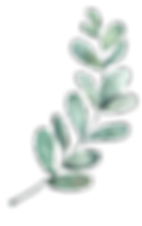mini-plante-decorative-2.png
