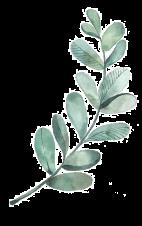 mini-plante-decorative-2.png