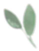 mini-plante-decorative-3.png