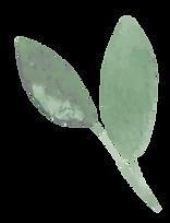 mini-plante-decorative-3.png