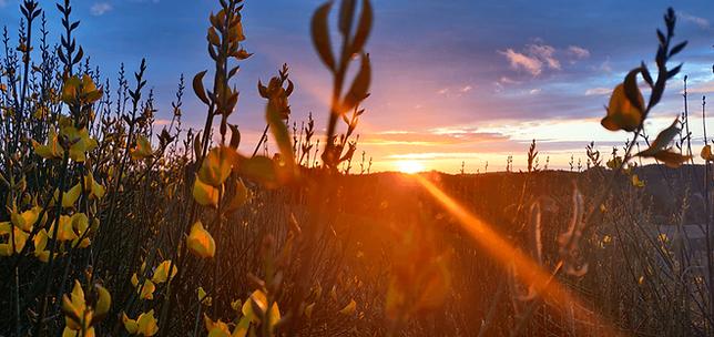 vue-panoramique-sunset-fleurs.png