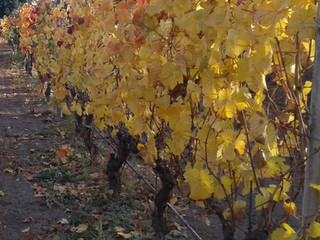 Fall, Fresh and Fantastic