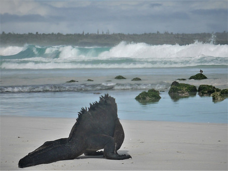 Islas Galápagos, itinerario