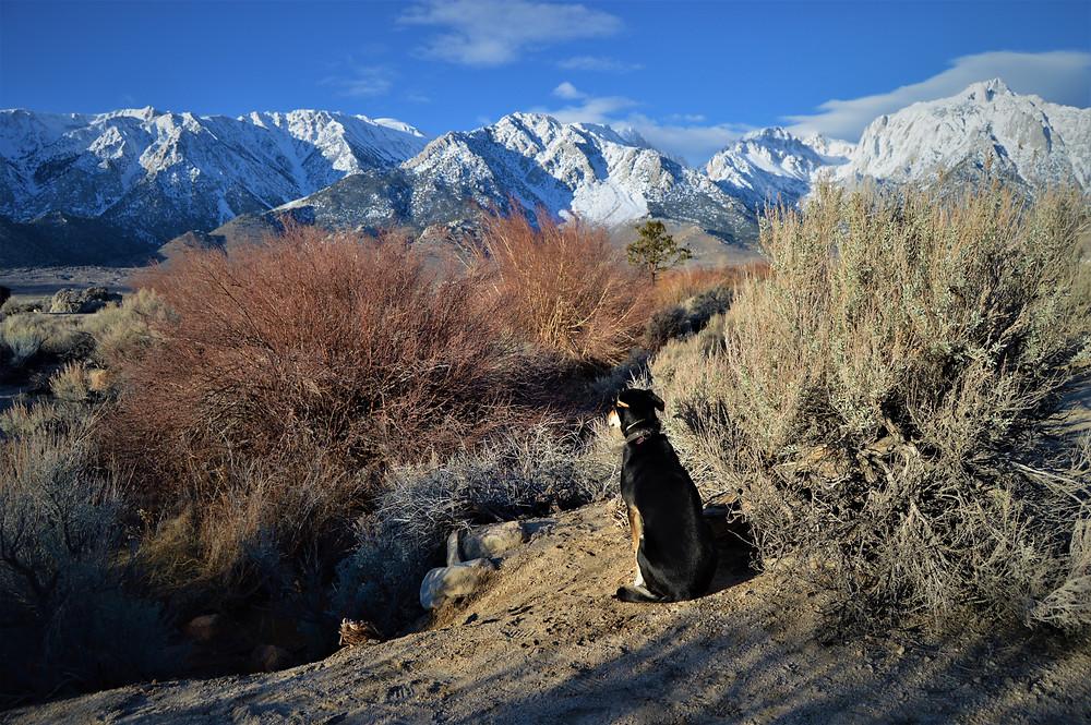 Sierra Nevada with dog