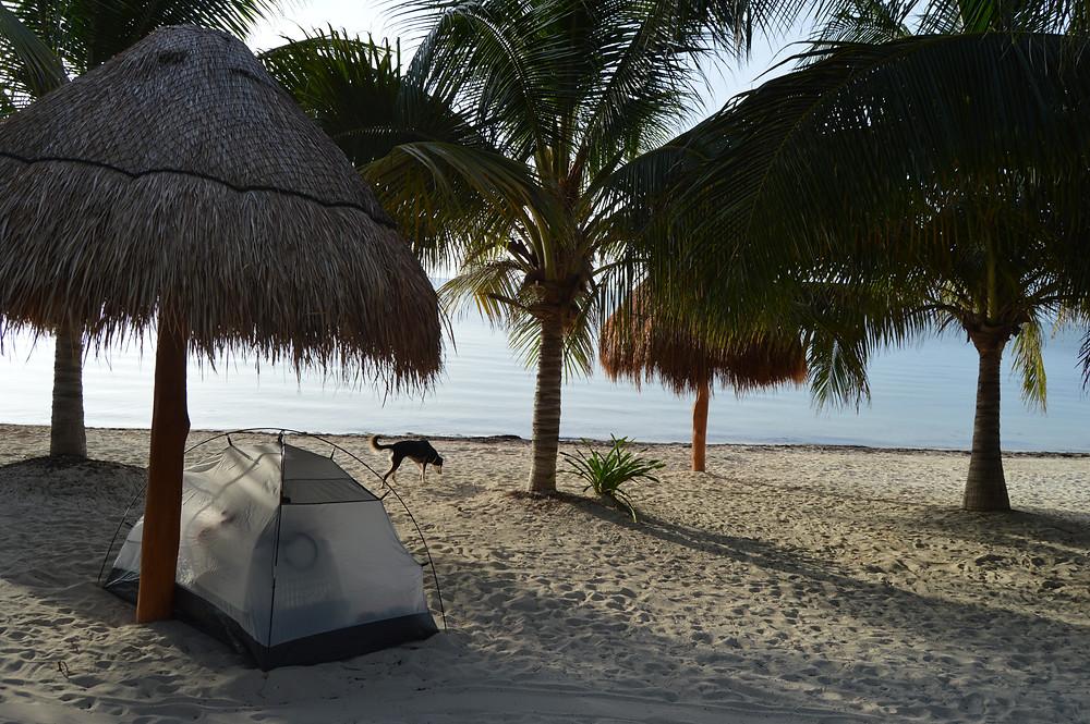 Playa dog-friendly en Cancún, kilómetro 32