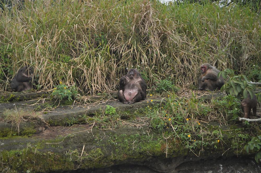 Nanciyaga Ecologiocal Reserve monkeys