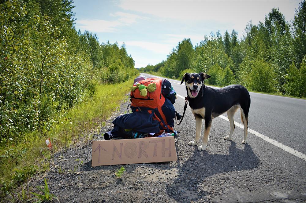 Traveling with dog Viajeros Perrunos Dog travelers