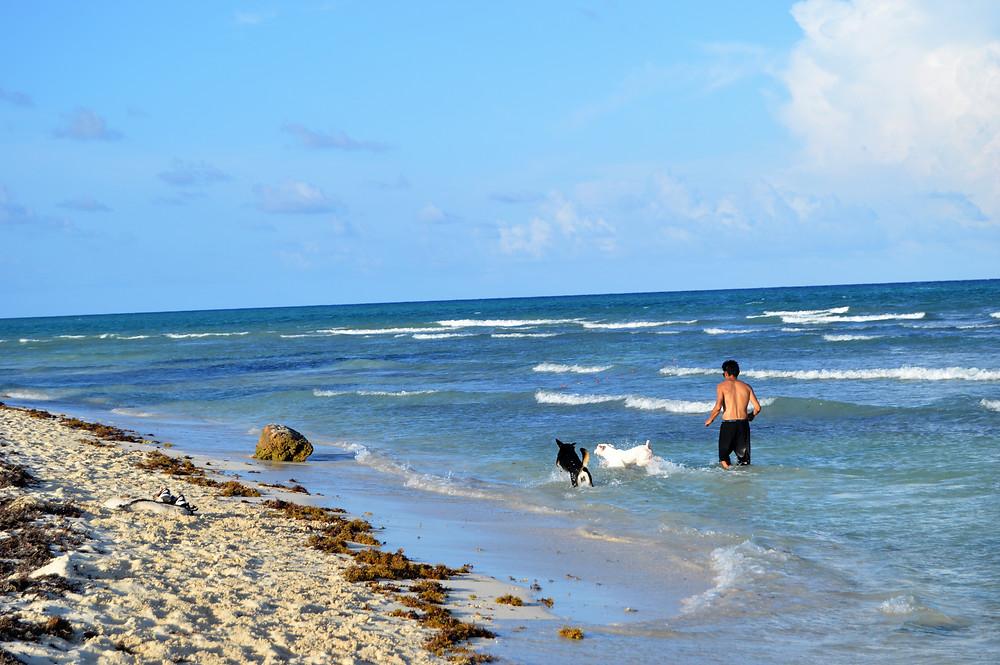 Xcalacoco Playa del Carmen dog friendly
